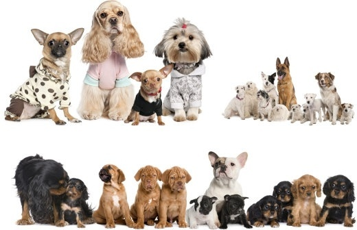 Pet Coupons, Deals and Promo Codes.
